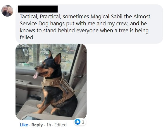 small engines and pet safety