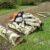 Is Birch Good for Firewood?White Birch Firewood Vs Black Birch Firewood